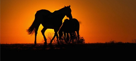 Убранство коня у башкир